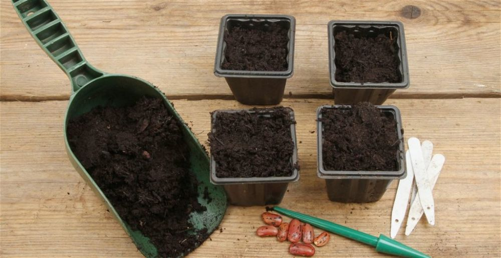 best-seed-compost