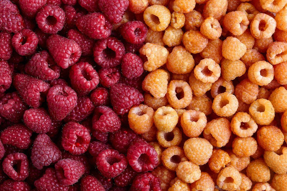 Red and golden raspberries