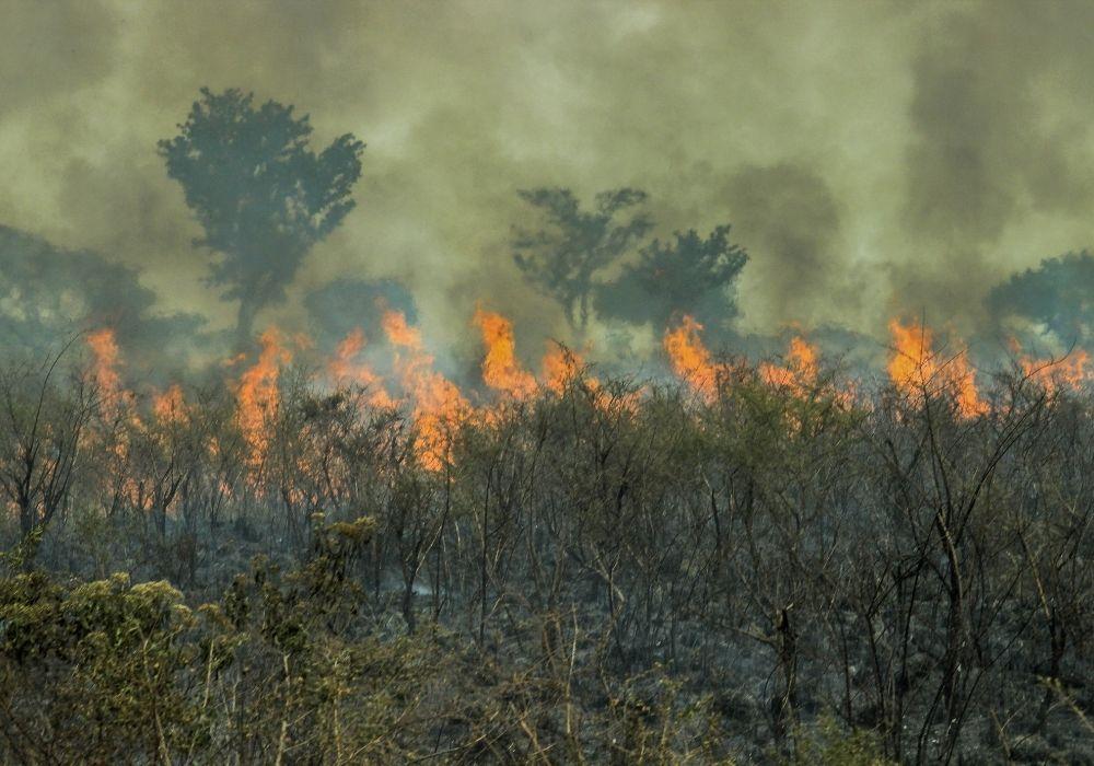 deforestation-climate-change