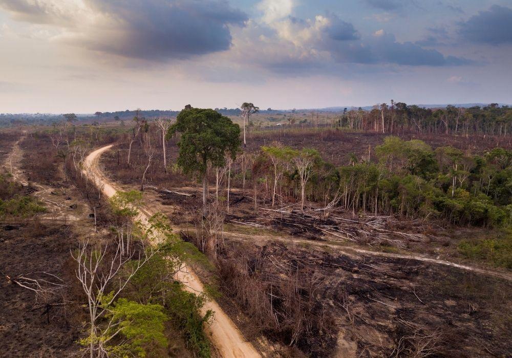 deforestation-in-the-amazon-rainforest