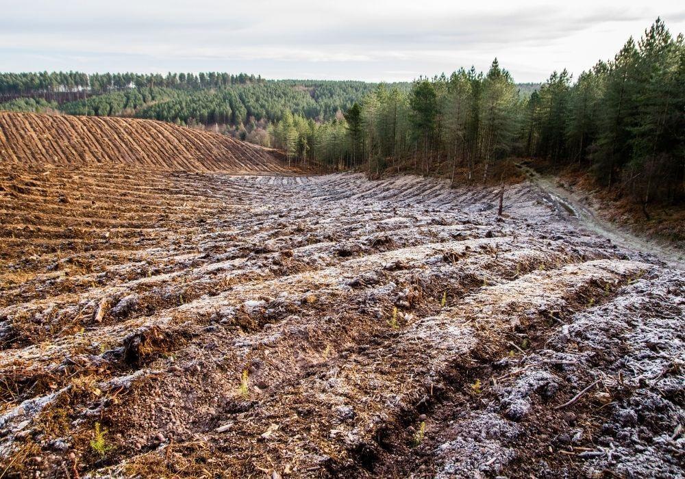 deforestation-staffordshire-uk