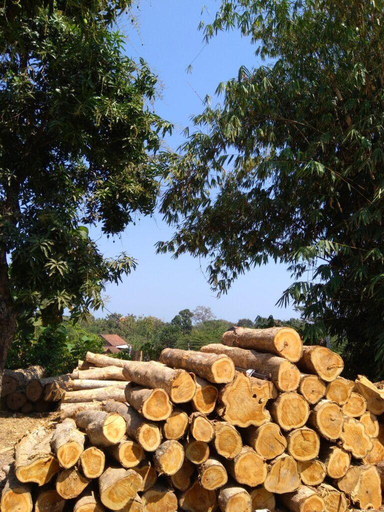 deforestation-timber-logging