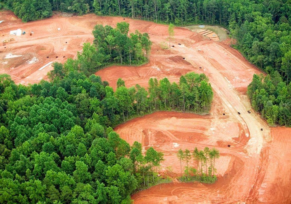 how-to-prevent-deforestation