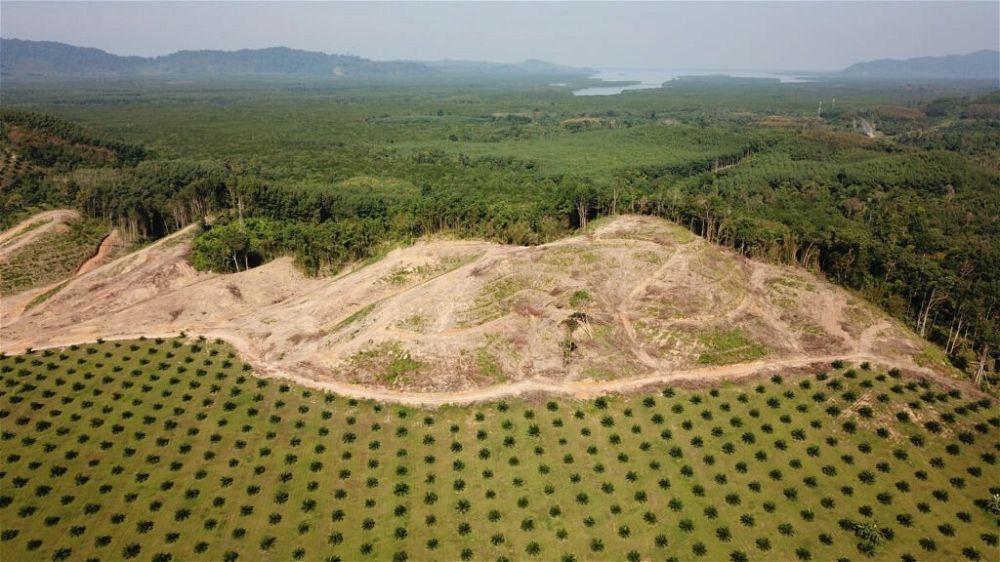 oil-palm-plantation-deforestation
