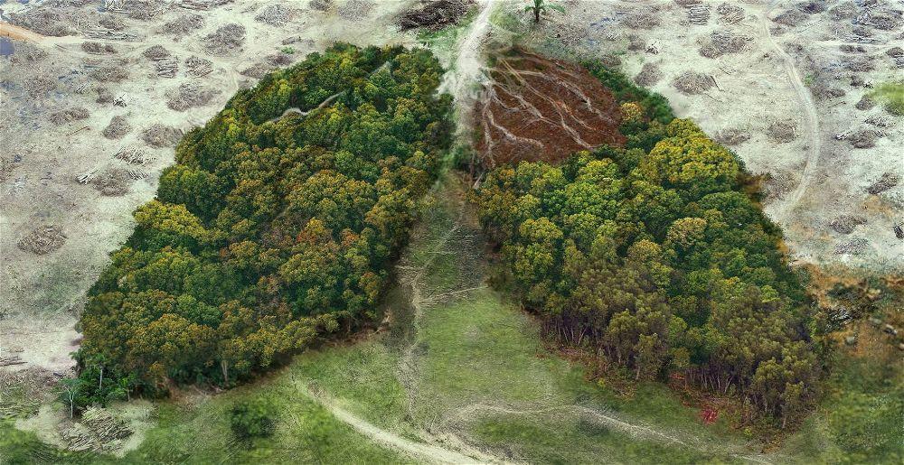 stop-deforestation