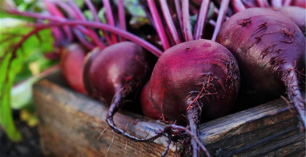 Harvested beetroot in box