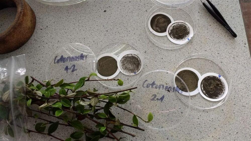 Pollution in petri dish