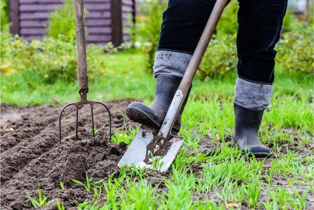 creating-an-open-garden-school-growing-project