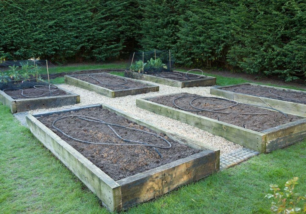 empty-raised-beds-garden