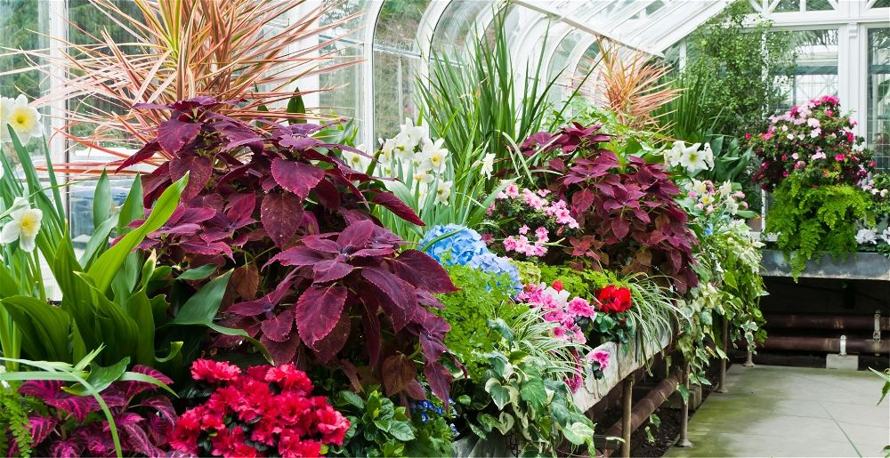 everything-about-greenhouses