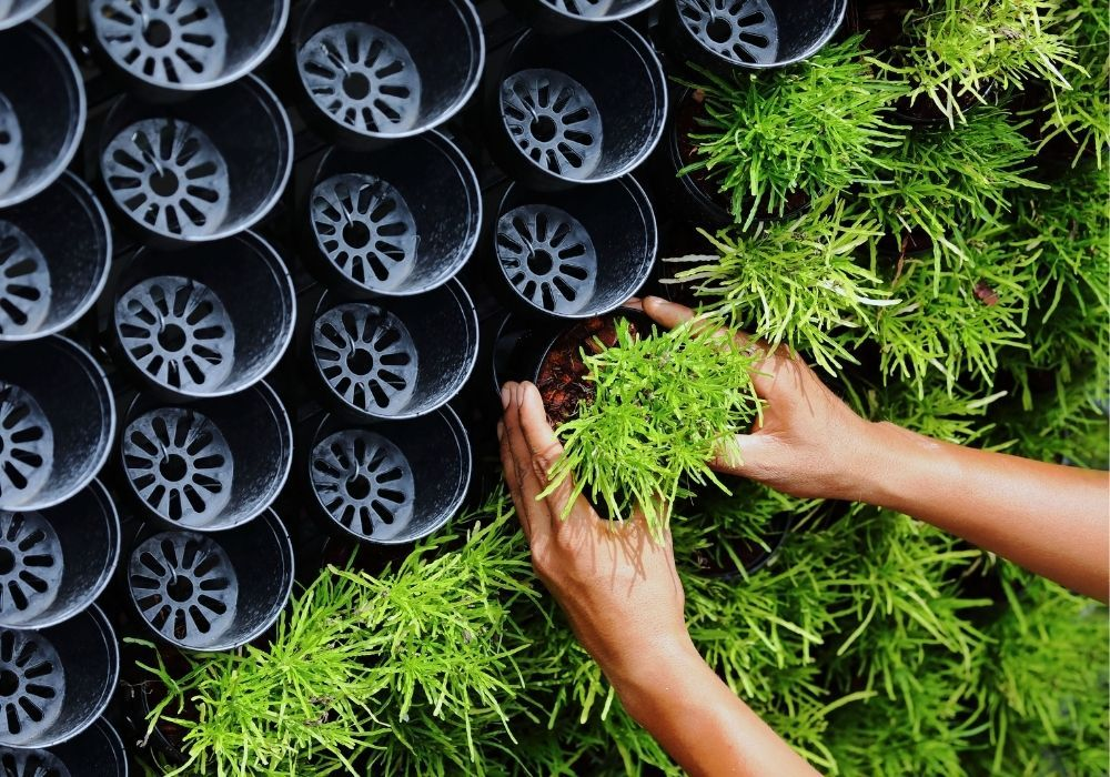living-wall-to-reduce-air-pollution