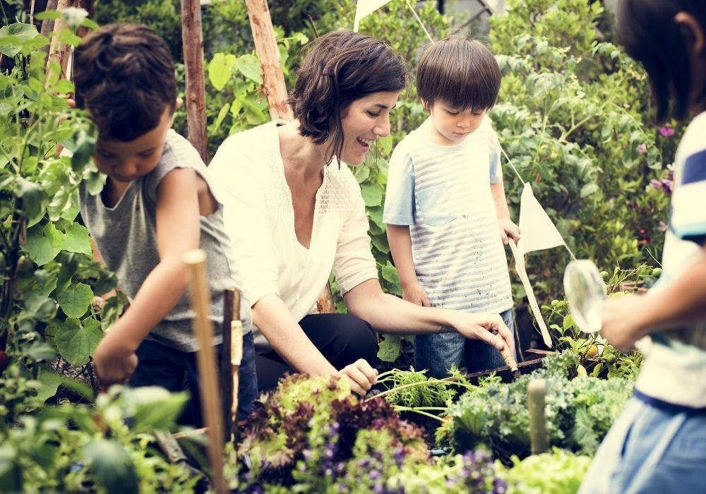 plants-school-growing-project