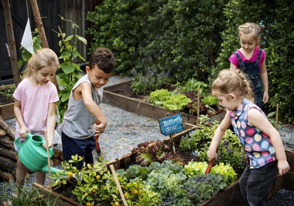 school-garden-growing-project