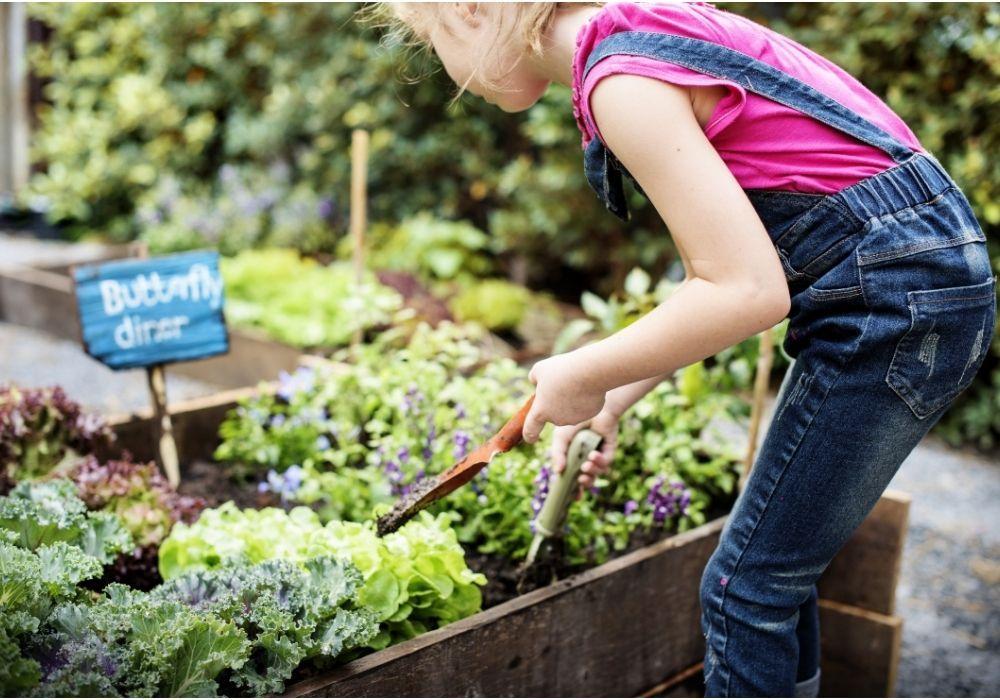 school-garden-growing