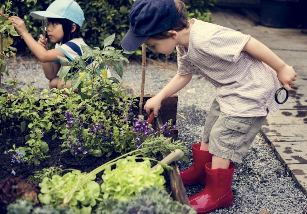 school-garden-learning-science