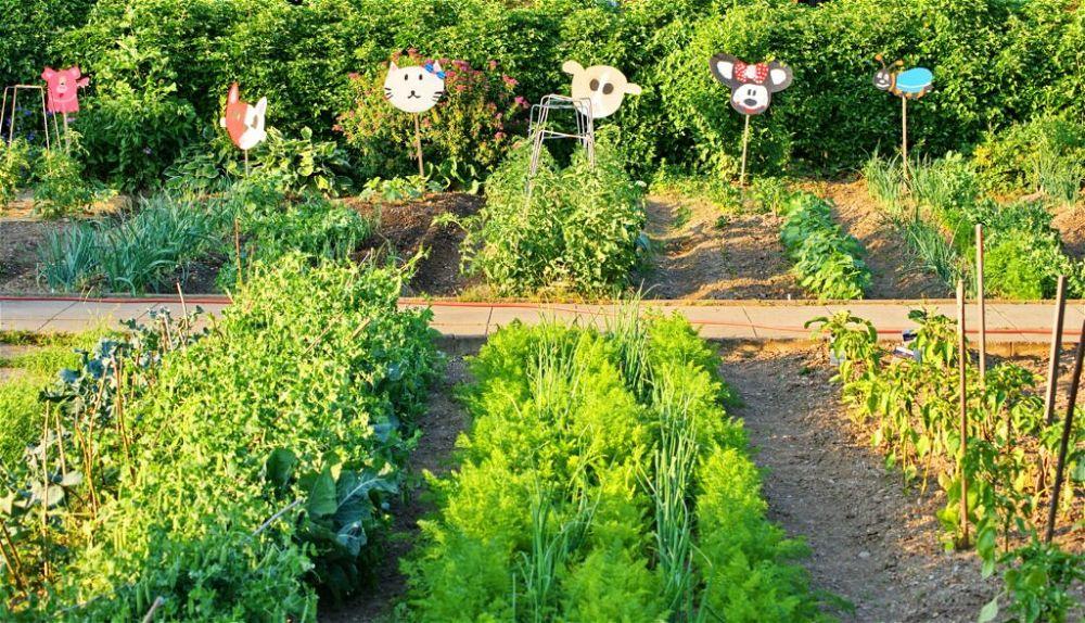 vegetables-school-garden