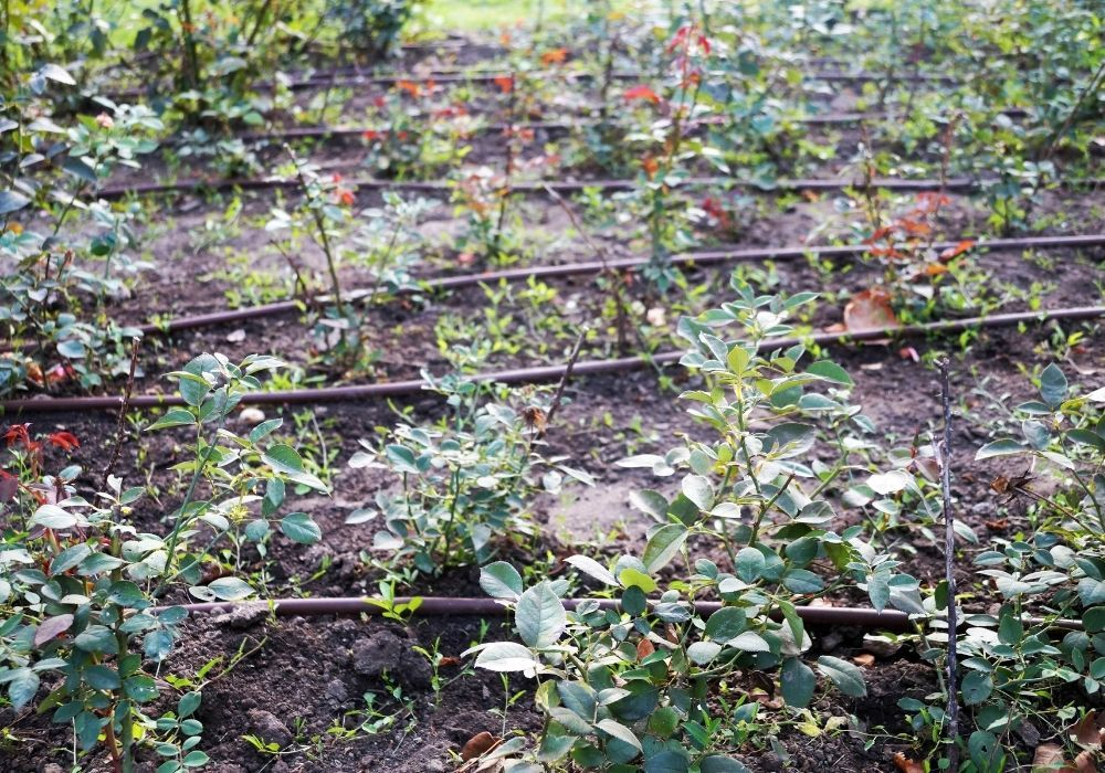 automatic-irrigation-on-a-flower-bed