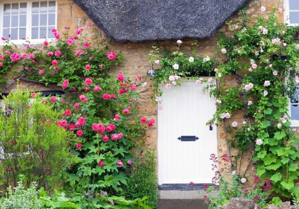 climbing-roses-wall