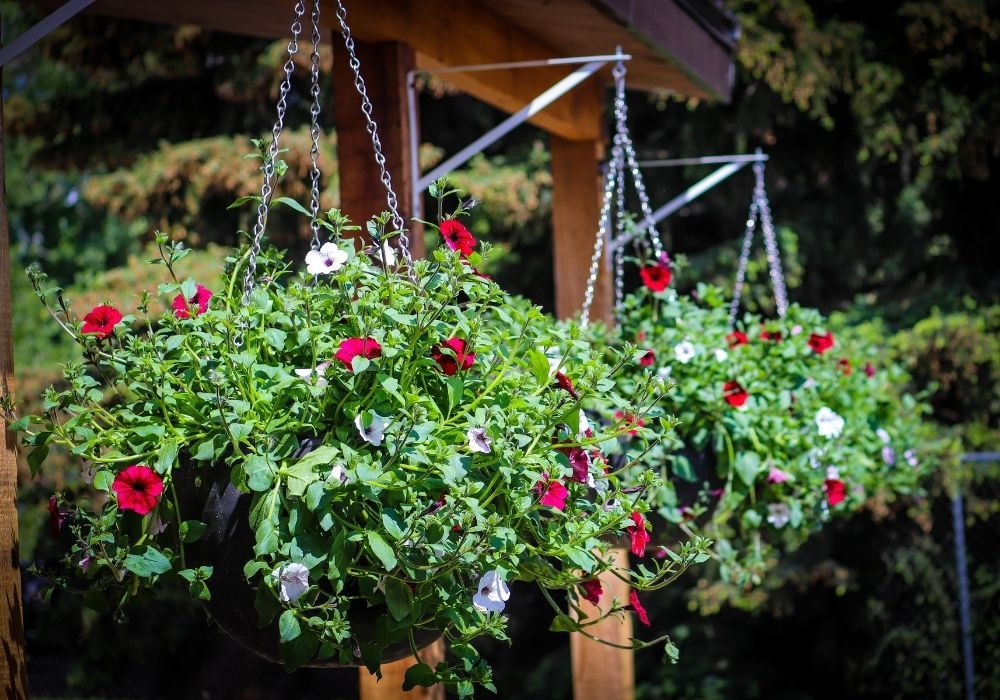 hanging-baskets-fixed-on-wooden-beam