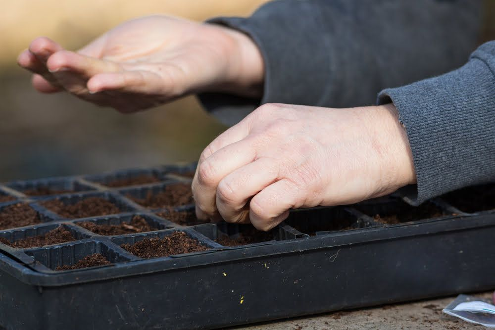 Person sowing seeds