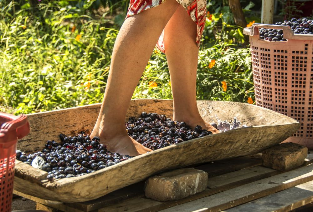 Woman crushing grapes with feet