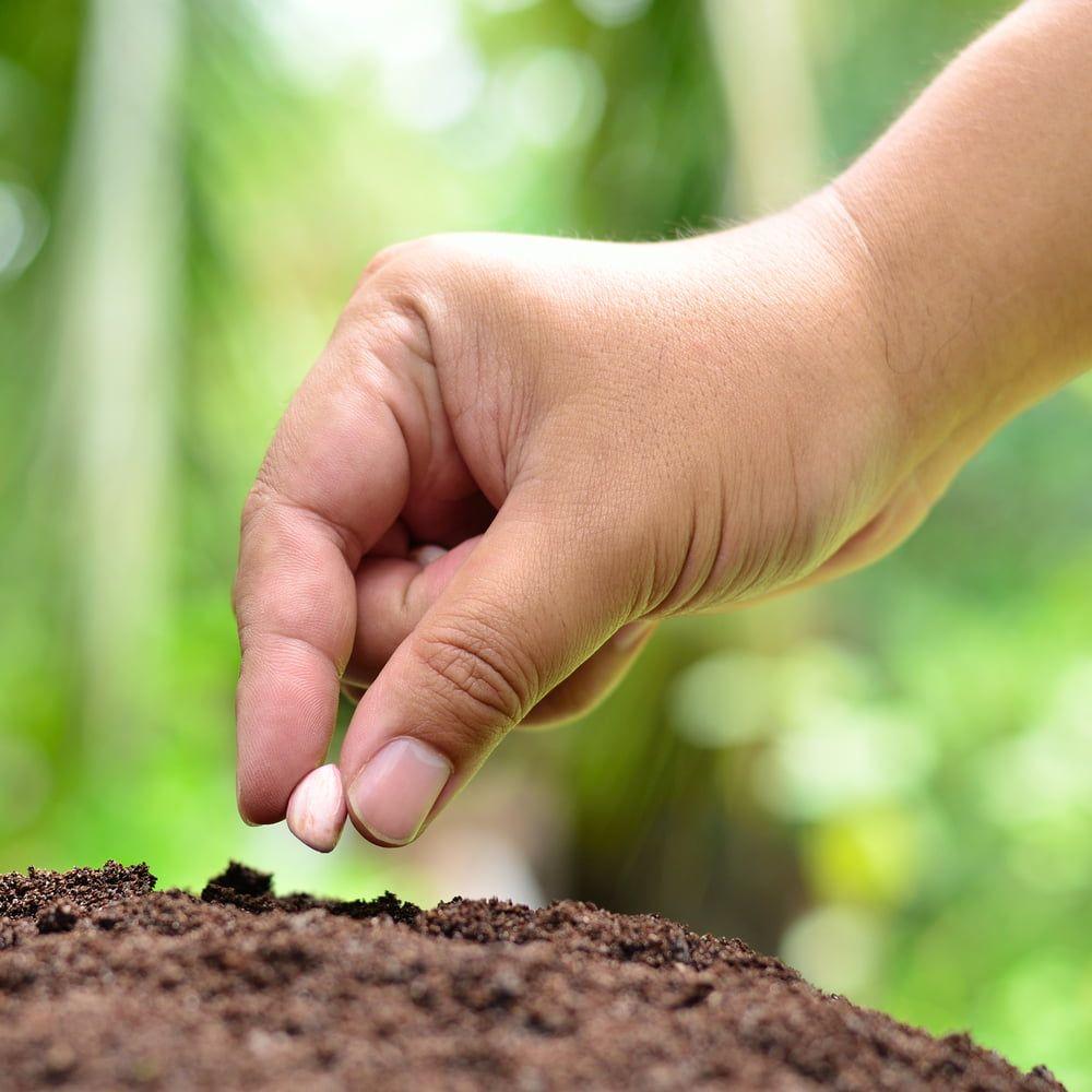 Hand planting peanut seed