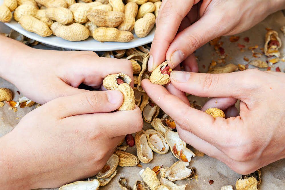 Hands shelling peanuts