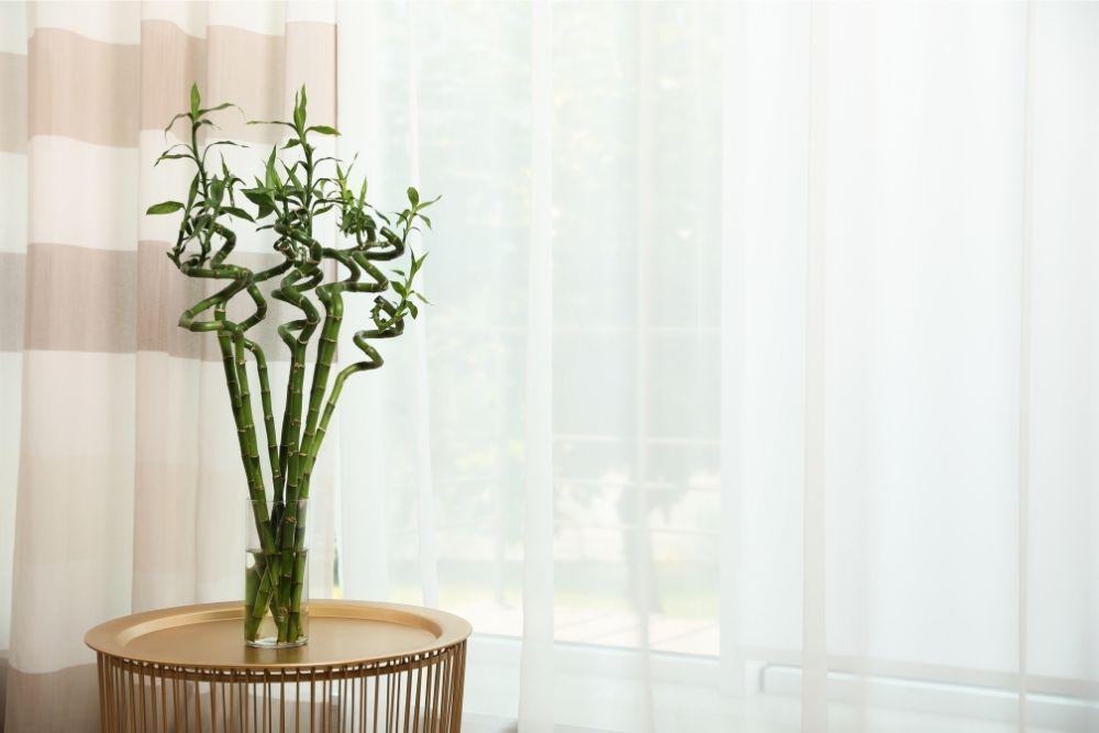 lucky-bamboo-houseplant-zodiac-pairing