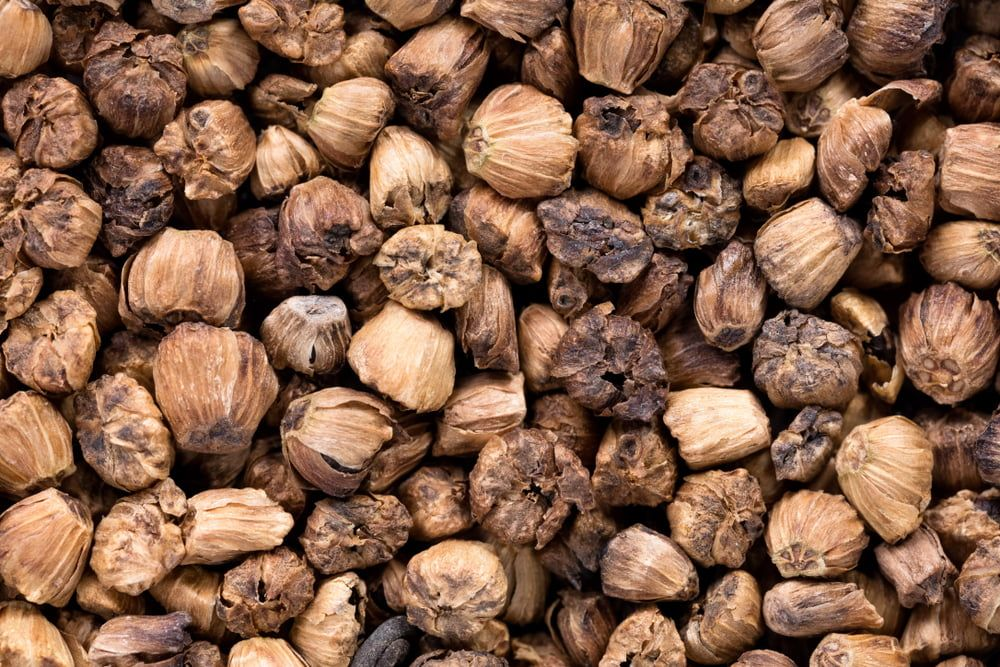 Agretti seeds