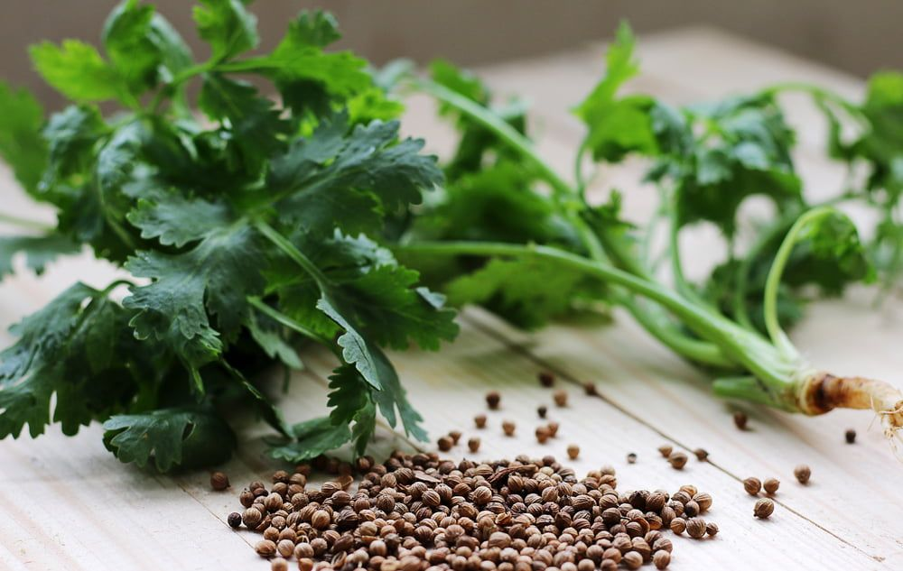 Coriander leaves and seeds on chopping board