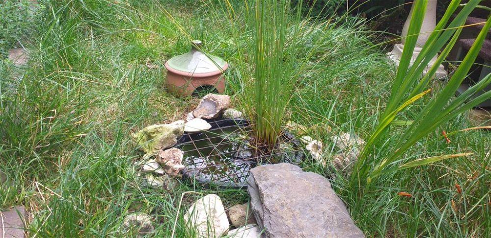 Algae filled bucket pond