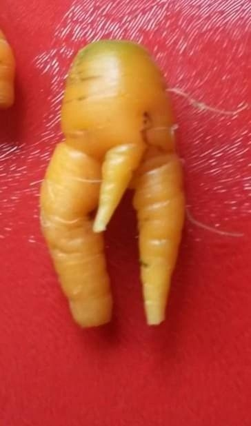 carrots august