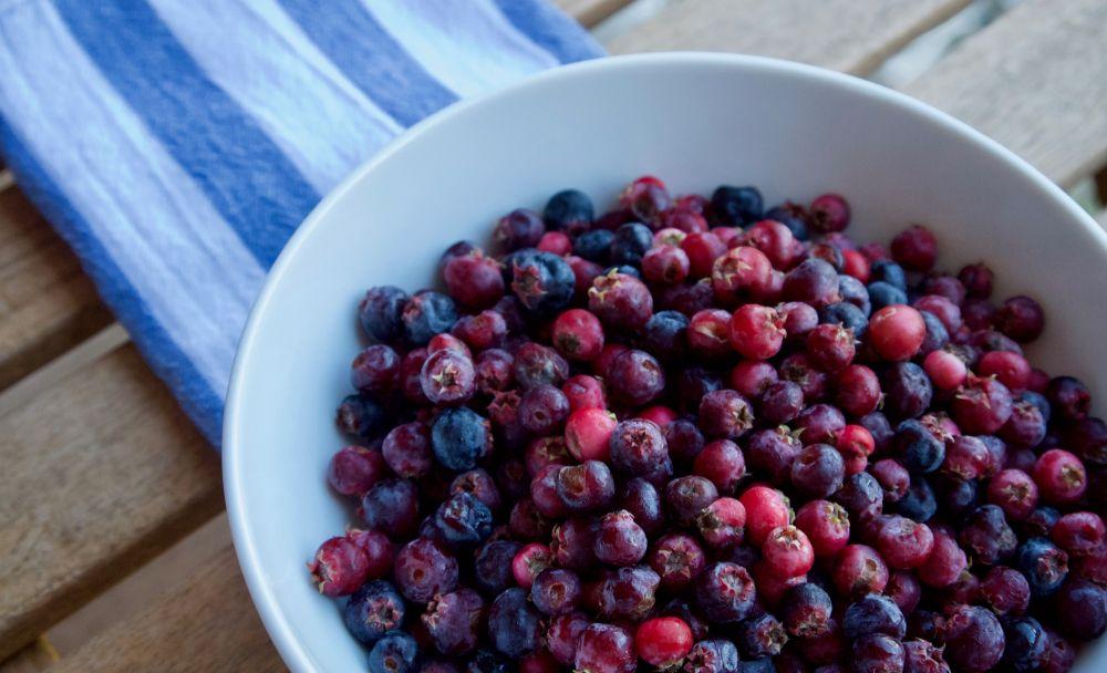 Juneberries in bowl