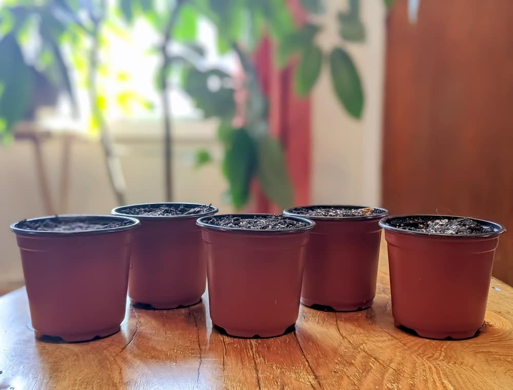 Small pots with soil