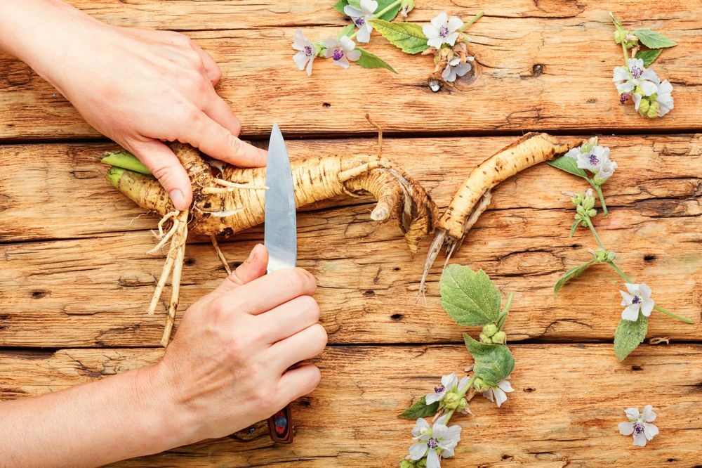 Hand cleaning marshmallow root with knife