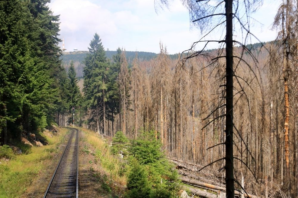 climate-change-forest-dying