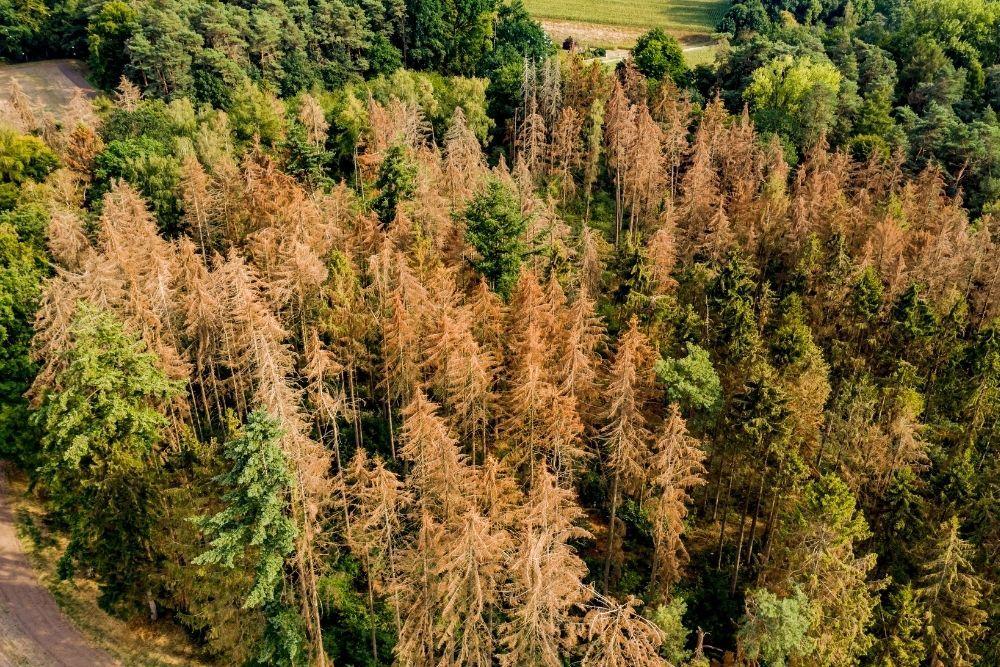 drought-coniferous-forest