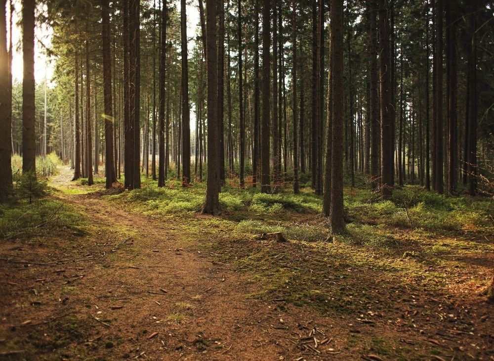 forest-trees-with-sunlight