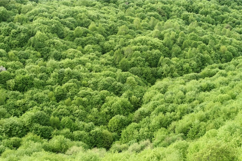 green-spring-forest