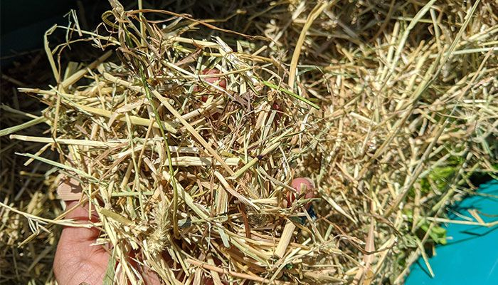 what-can-i-shred-in-a-garden-shredder-hay