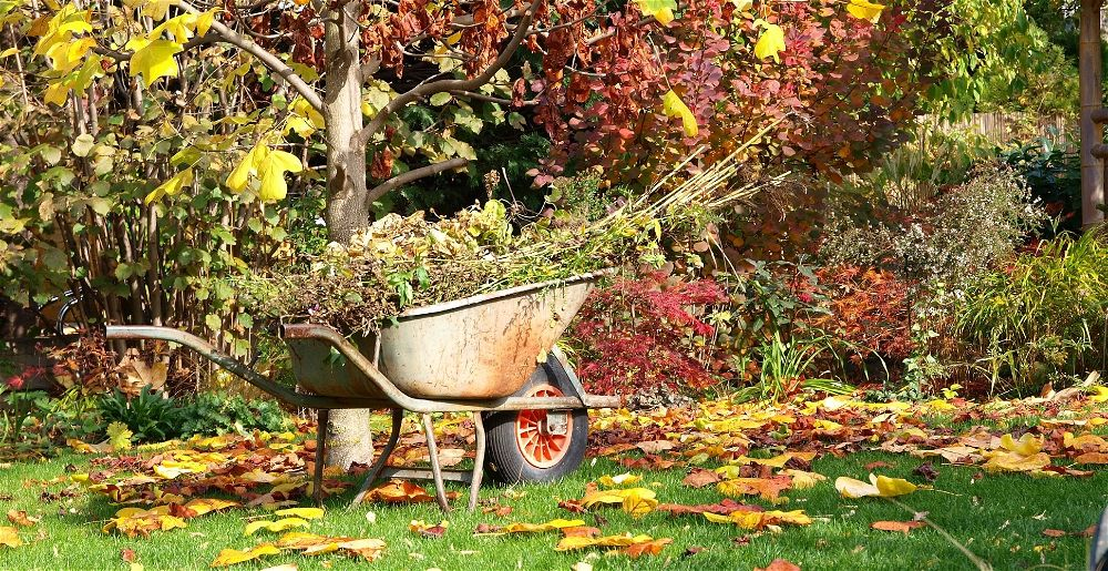 what-to-do-in-the-garden-in-october