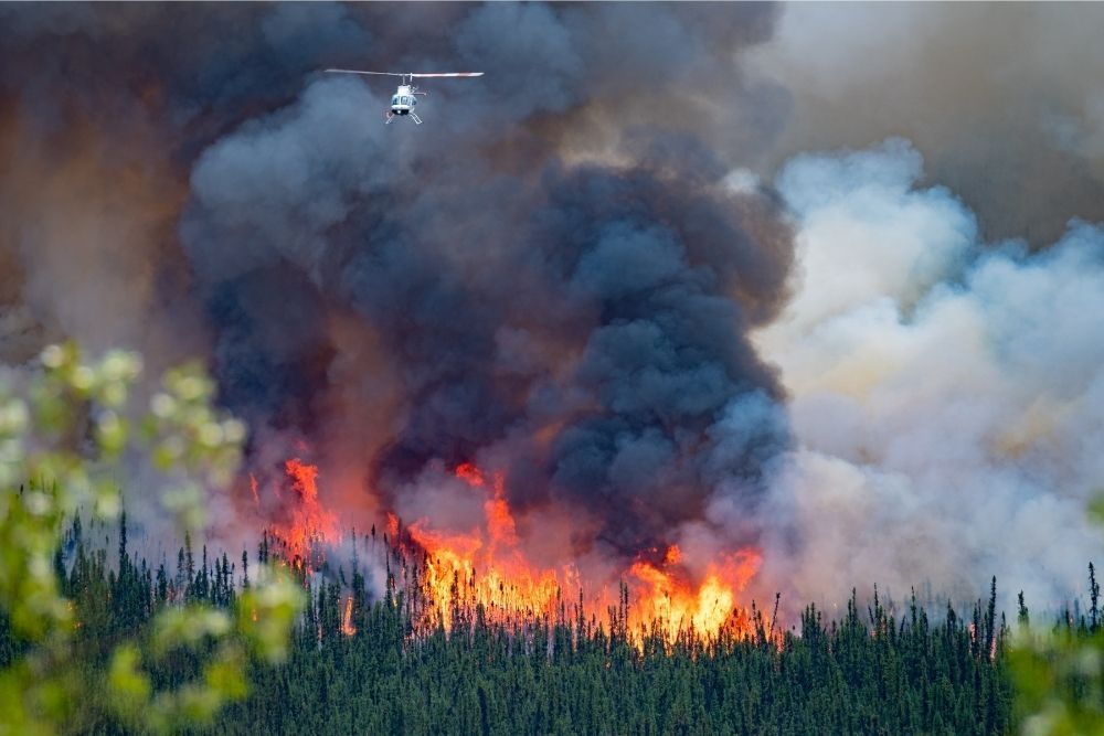 wild-forest-fire-in-canada