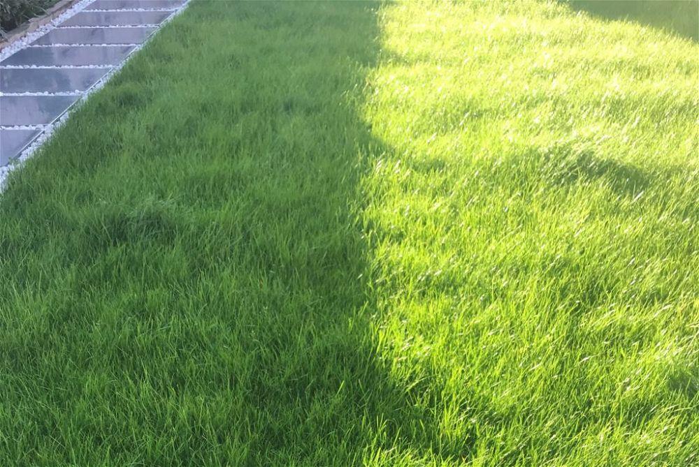 Half sunny grass