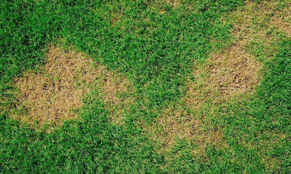 green-and-brown-patch-grass