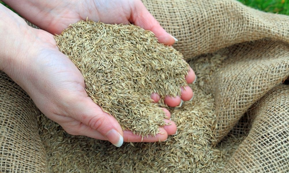 how-long-does-grass-seed-last