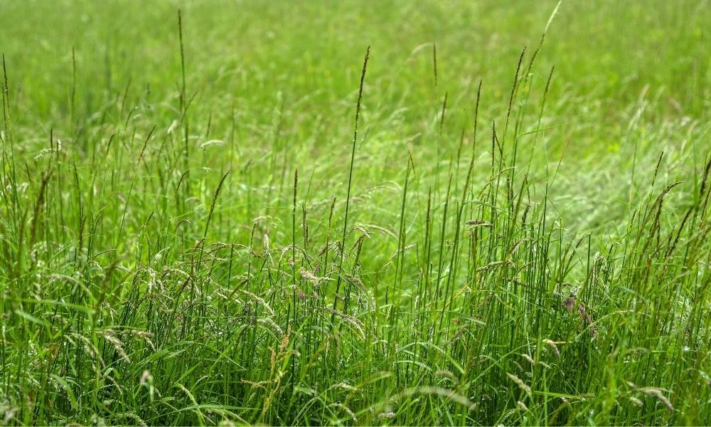 how-to-cut-really-long-grass