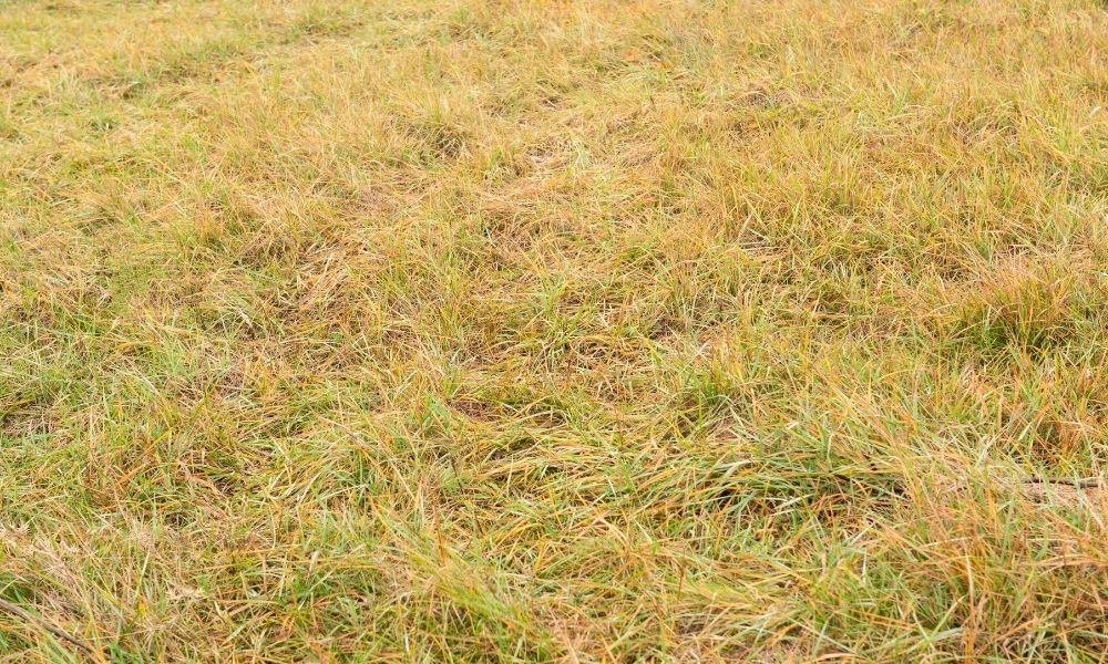 how-to-fix-grass-turning-yellow