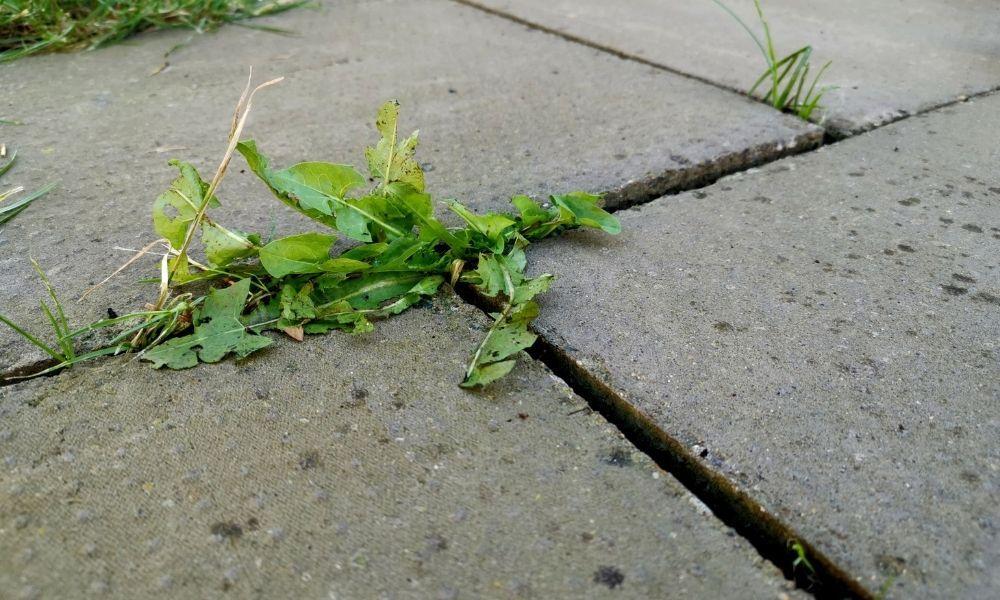 how-to-stop-weeds-growing-in-block-paving