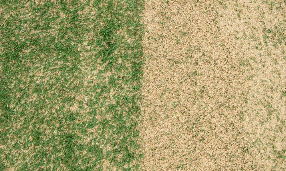 what-is-lawn-sand-and-why-you-should-use-it